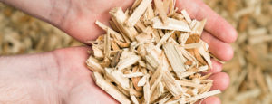 Hände gefüllt mit Holzschnitzeln. Die Schnitzelheizungen der Firma Urs Metzger AG halten Ihr Zuhause warm.