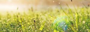 Eine saftig grüne Wiese. Mit der Energie der Erdwaermepumpe sole-wasser kann die Urs Metzger AG Ihr Zuhause schön warm halten.