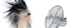 Hund mit langen Haaren vor laufendem Ventilator. Komfortlueftungen der Firma Urs Metzger AG.