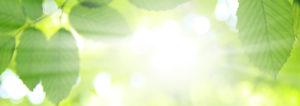 Blätter eines Baumes mit Sonneneinstrahlung. Mit einer Luft-Wasser-Waermepumpe heizen Sie mit Luft und Wasser Ihr Zuhause.