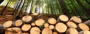 Ein Stückholzstapel in einem Wald. Dank den modernen Stueckholzheizungen der Firma Urs Metzger AG halten Sie Ihr Zuhause kuschelig warm.